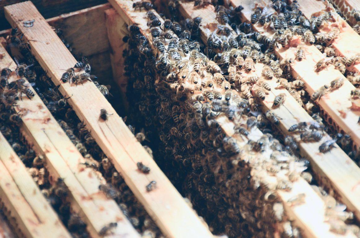 Ein Blick in den Bienenstock im Alpenresort Schwarz