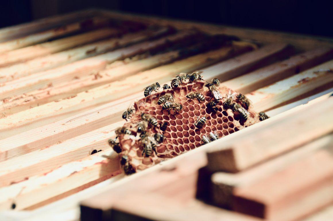 Wissenswertes zu den Bienen im Alpenresort Schwarz