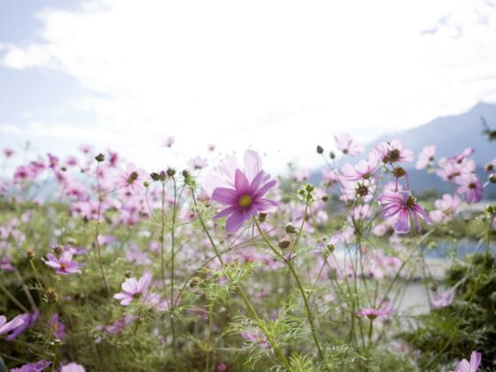 Blumenwiese in Tirol